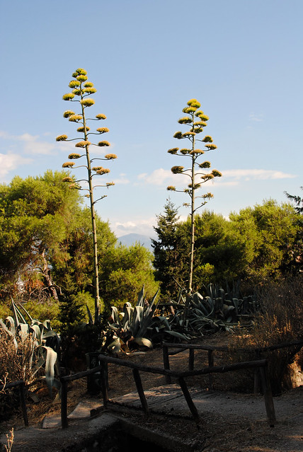Awesome Dr. Seuss Trees