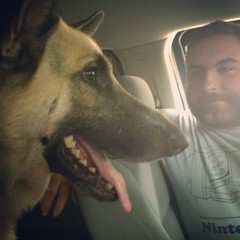 Winston waiting patiently for his corndog at Sonic. #gsd #germanshepherddog #dogstagram #dogsofinstagram