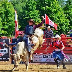 Dang! These #cowboys work so hard. #rodeo #bull #bullriding #rodeoclown #thornbury #ontario #8seconds #ouch