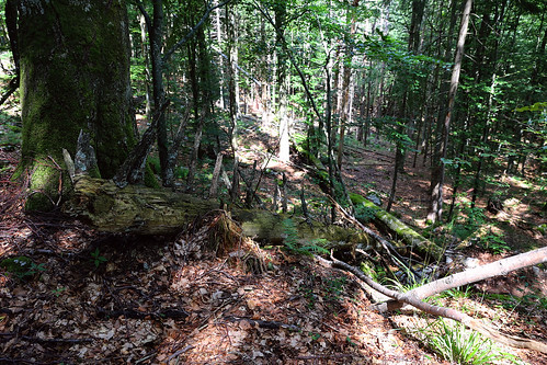 forest wald gozd canoneos6d ef2470mmf28liiusm