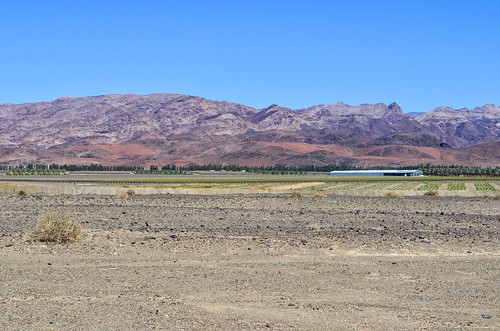 Grape farms of Aussenkehr, Namibia