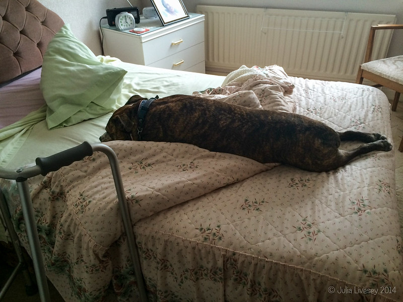 Dad's nicely made bed obviously wasn't comfortable enough for Jez
