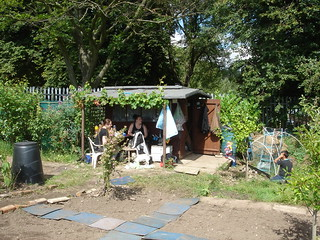 Summer on the allotment