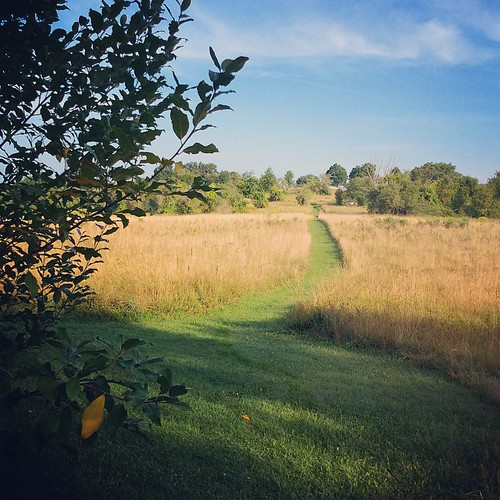 Morning at Mount Pollux Conservation Area, Amherst, MA #amherst #summer #morning #westernma #joy