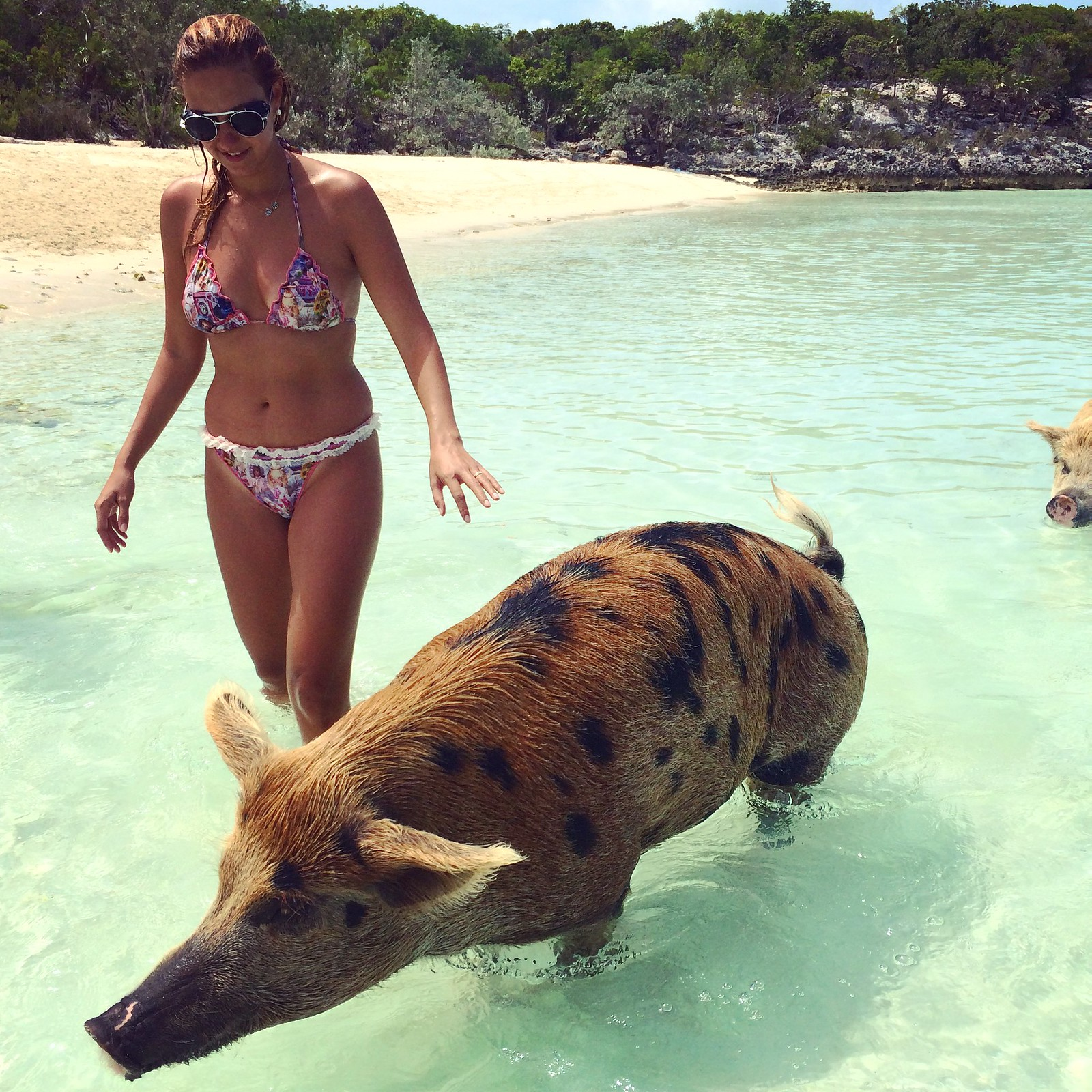 pig beach also known as pig island major cay and officially big major ...