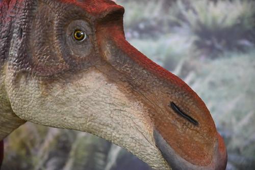 dinosaur D750 03