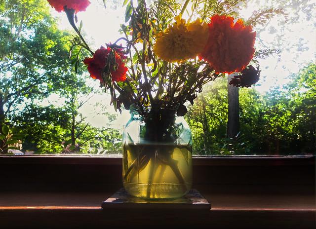 cut flowers (2014)