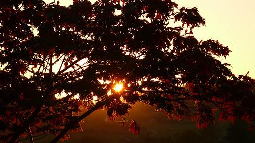 nature sunrise sonnenuntergang natur sonne 2007 ahorn rafz rietgasse