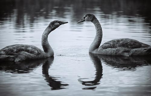 Die Geschwister haben sich viel zu erzählen, ist ja auch viel passiert, seit sie von der anderen Seeseite rübergeschwommen sind.