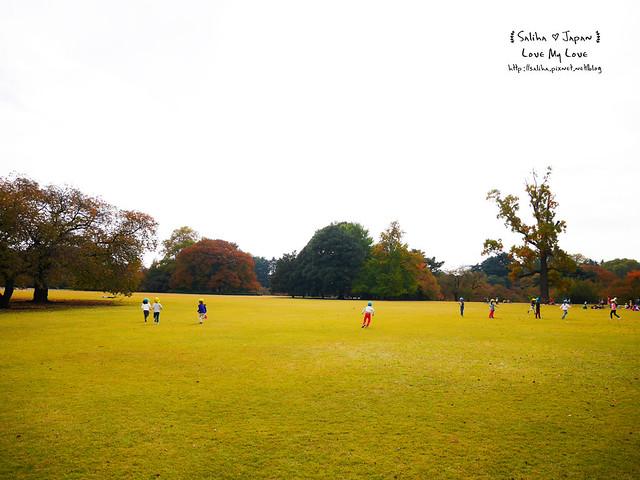 日本東京自由行新宿御苑庭園景點 (1)