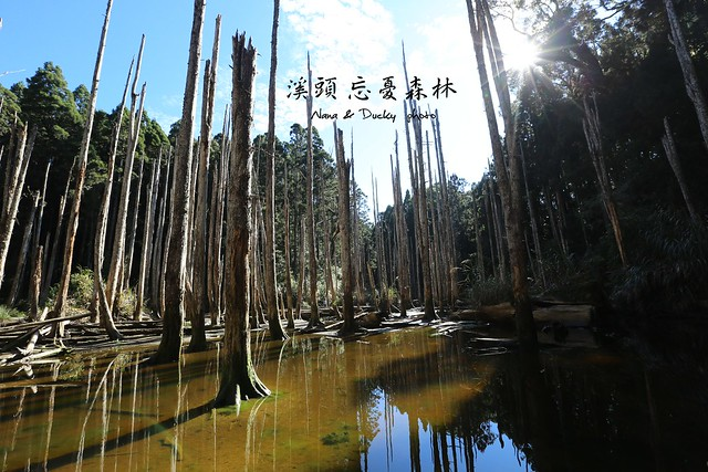 溪頭忘憂森林 (1)