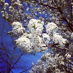 Brooklyn Sakura