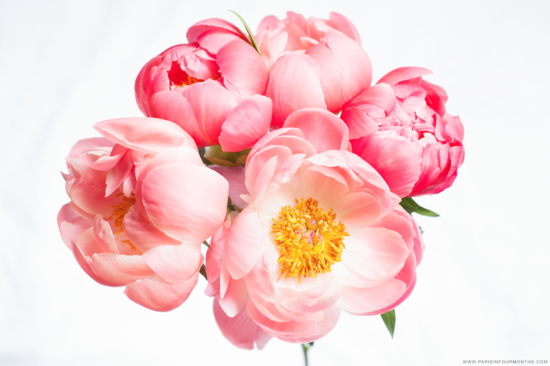 Pink peonies by Carin Olsson (Paris in Four Months)