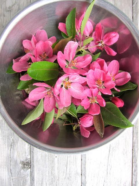 Sakura or Cherry Blossom Jellies