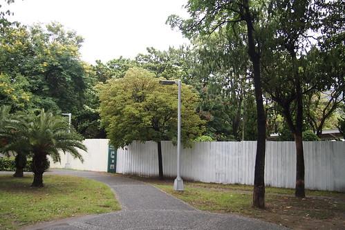 市民直到公園裡圍起了白色圍籬,才知道樹要被移走。攝影:李育琴