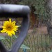 Sunflower Through a Handle