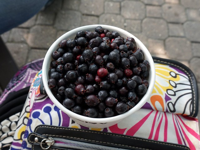 SASKATOON berries.