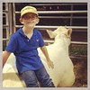 Cord with friend's Charlois cattle after the fair.