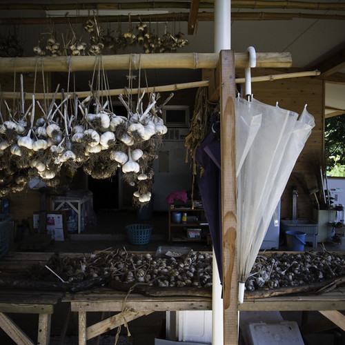 Drying Garlic on the ARI Teaching Farm