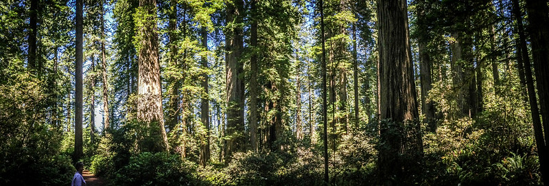 Redwoods and Elk-045