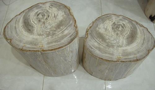 Polished Petrified Wood for sale