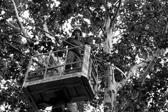 Arborist / tree surgeon