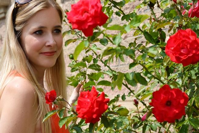 Like roses (2)
