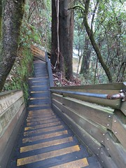 2014-08-10 Lilydale Falls 032 - Track steps to lower falls