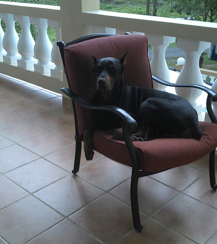Jack in his chair