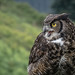 Wildlife Wednesday - Great Horned Owl by Mars Observer ♂