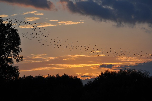 .. a sunrise migration ..