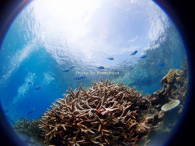 サンゴがとても美しい!