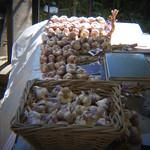 Garlic Galore