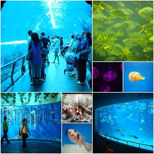 國立海洋生物博物館14
