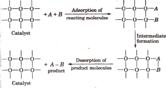 CBSE Class 11 Chemistry Notes Surface Chemistry