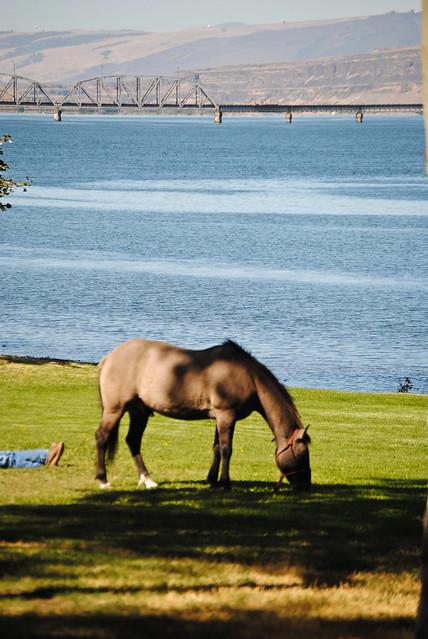 Horse Enjoying the Shade
