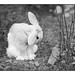 Bamse the Rabbit