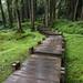 Parc national d'Alishan