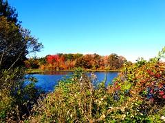 Mill Pond Park -- Autumn (139)