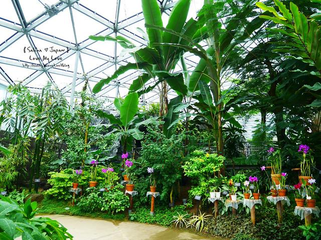 日本東京景點新宿御苑溫室植物 (28)