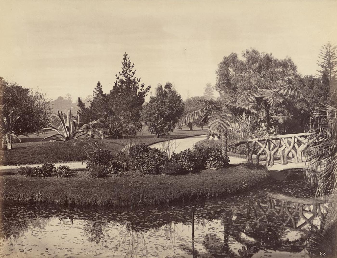 Botanical Gardens, Sydney, 1877