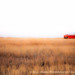 Red Boat on the Plains by Bill Hobbs Photography