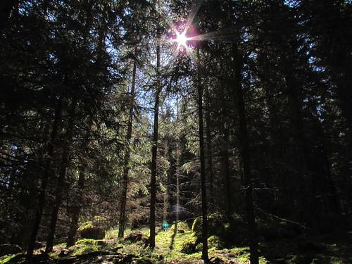 sun suomi finland spring woods metsä aurinko kevät luusniemi