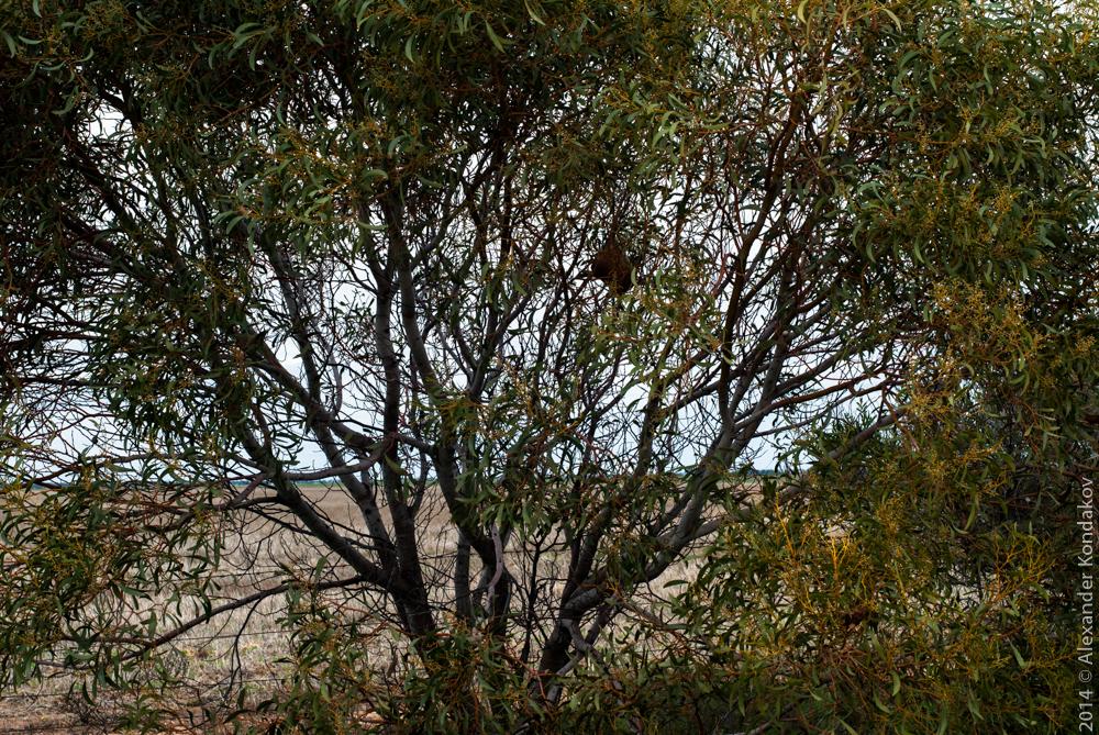 Wallaroo South Australia-10
