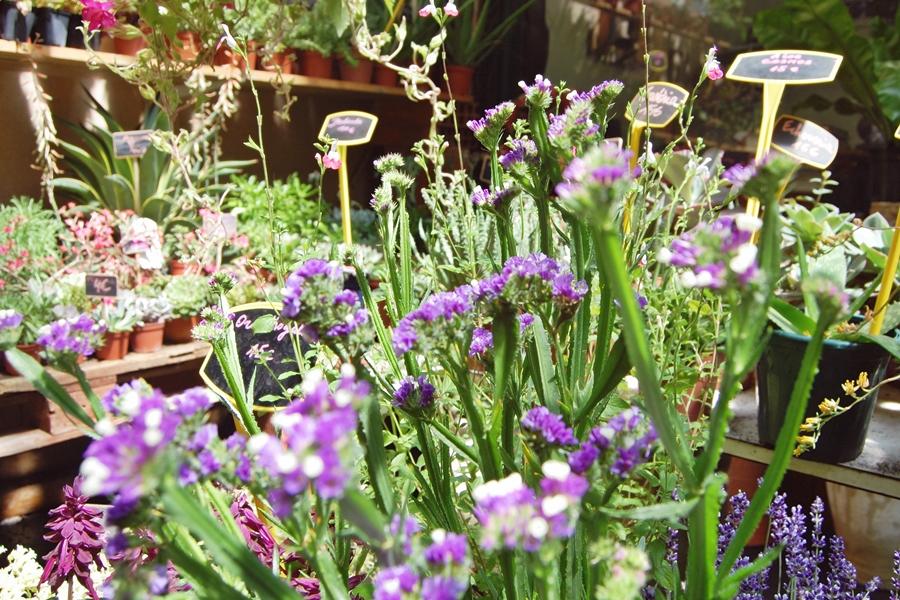Marché aux fleurs (3)