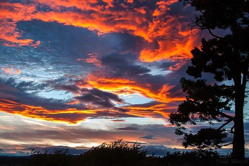 sunset canada tree nature clouds evening colours bc dusk britishcolumbia scenic victoria vancouverisland esquimalt prio saxepoint