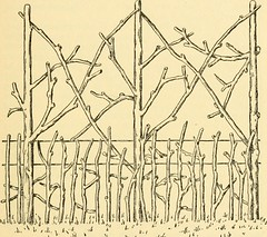 """Image from page 222 of """"Rose gardening; how to manage roses and enjoy them"""" (1922)"""