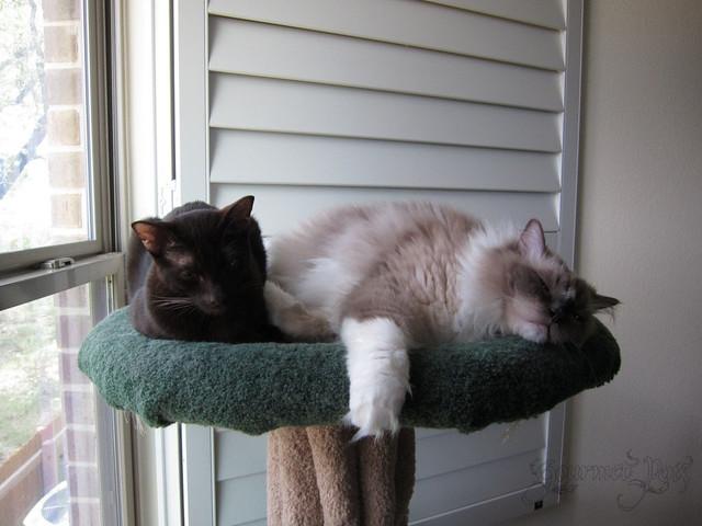 Tyco & Ellie