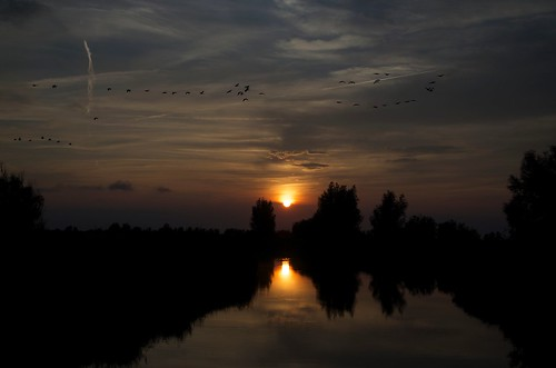 blue sunset red sky orange cloud sun reflection bird reed water netherlands birds clouds nikon cloudy ngc lelystad oostvaardersplassen d5100
