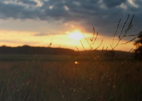 sunrise wildlife montezumanationalwildliferefuge